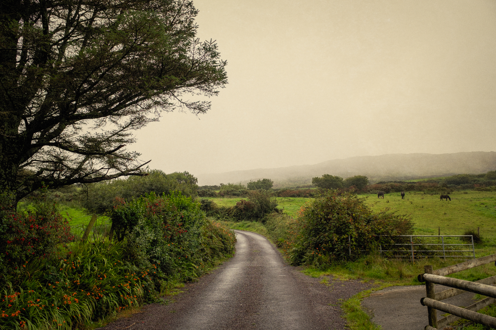 Back Roads of Ireland